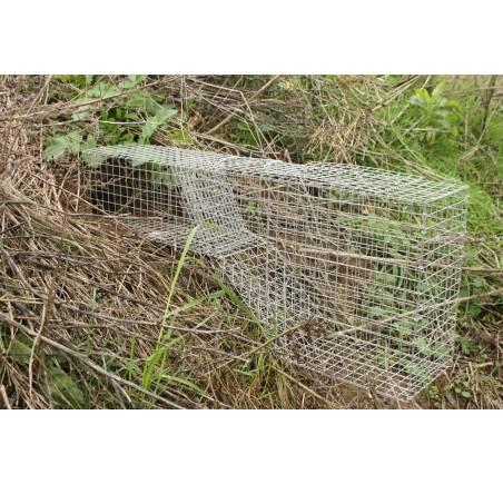 cage renardeaux
