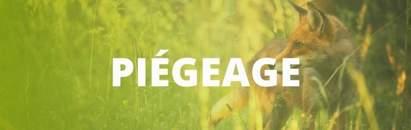 Piegeage - HenonShop