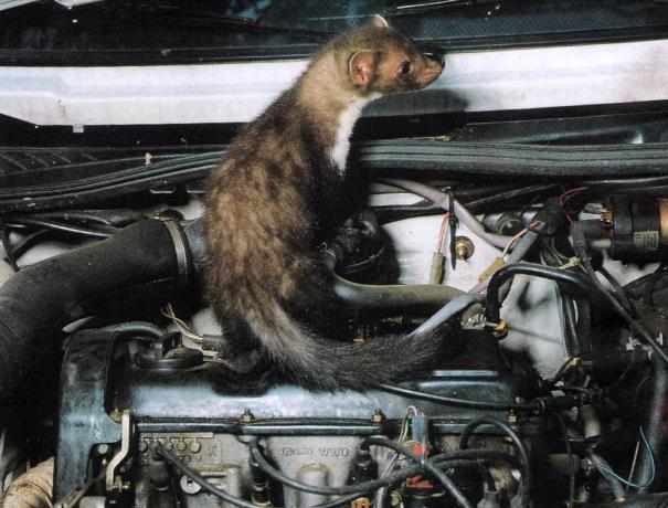 nuisible dans moteur